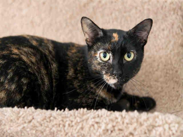 Carline cat
