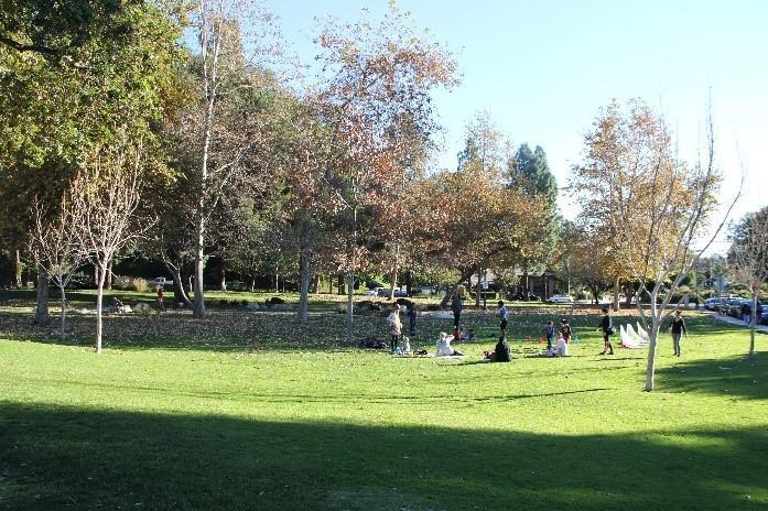 CC Grass Area