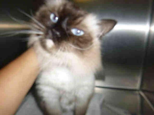 Tilly cat