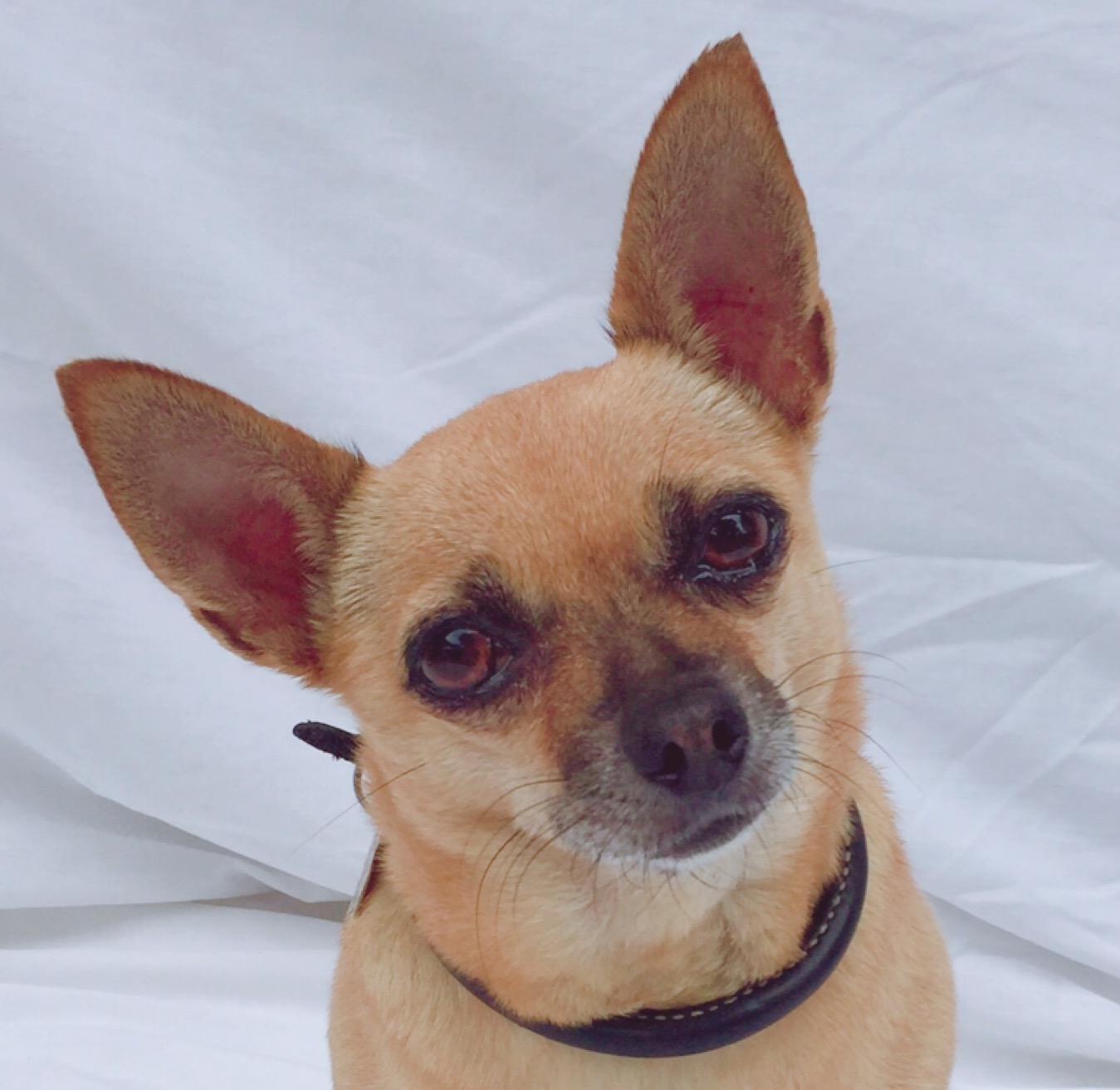 Chikis dog