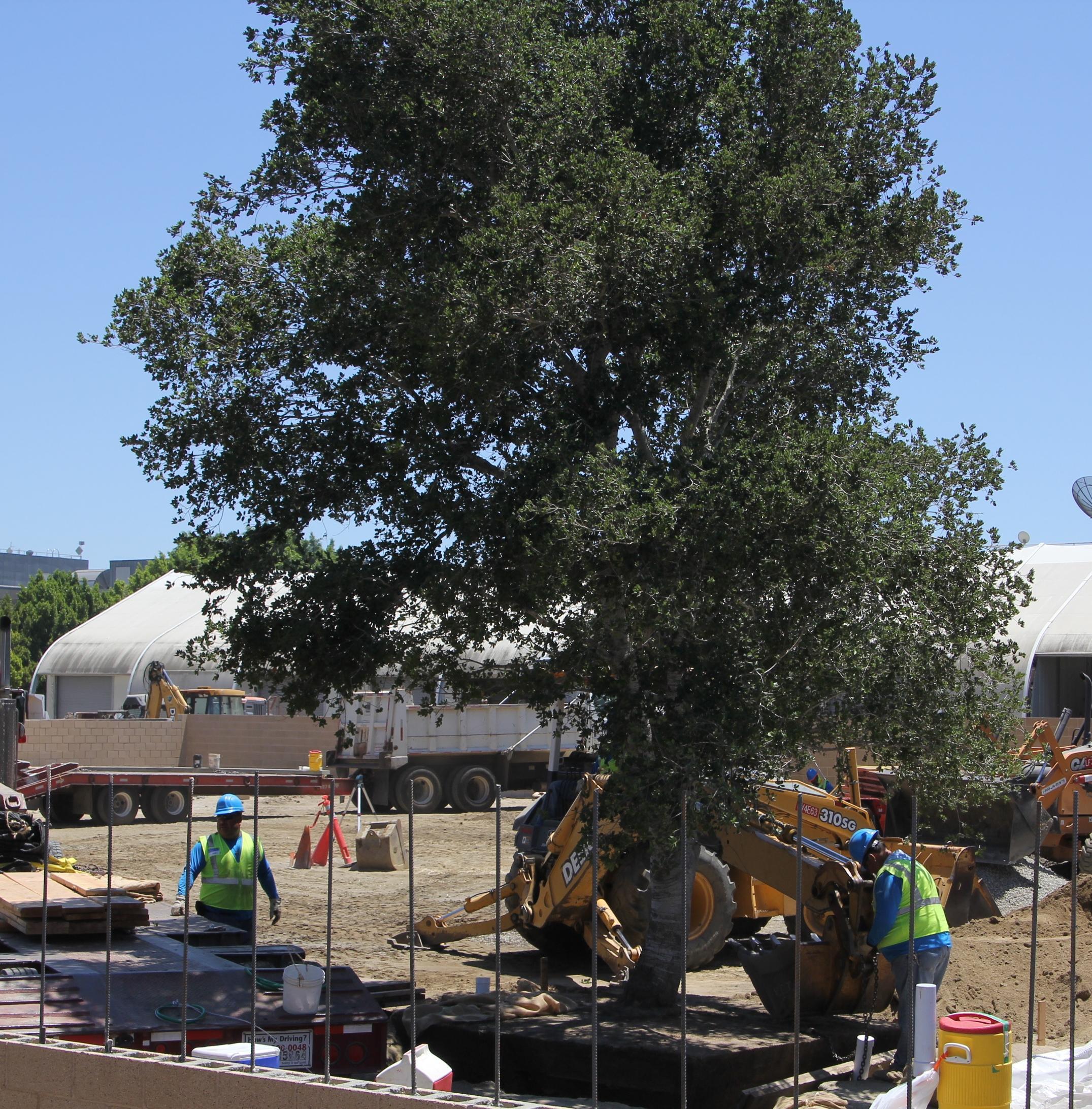 Tree planing 4