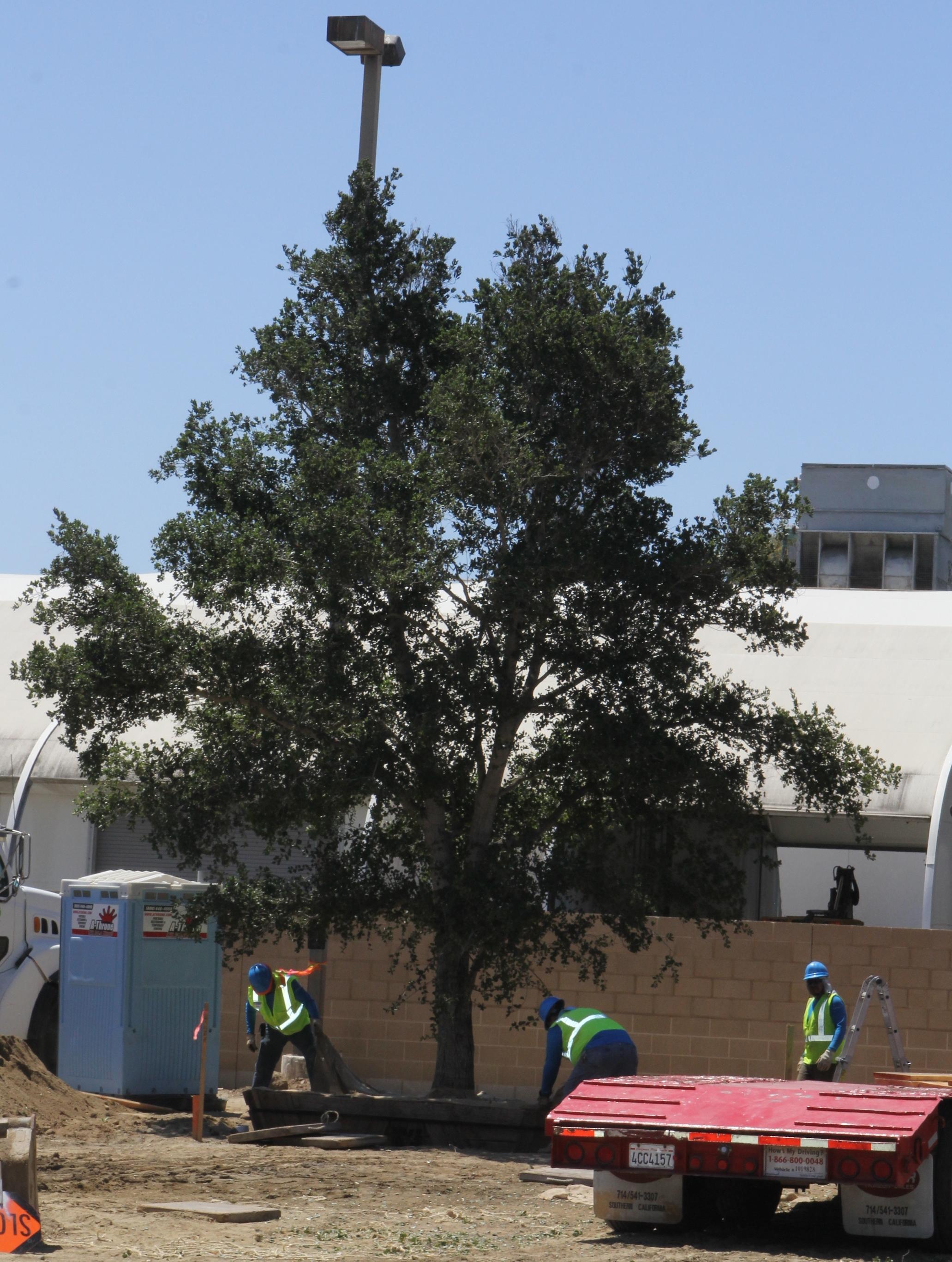 tree planting 5