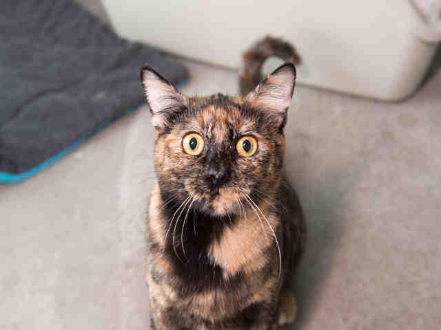 Gloria cat