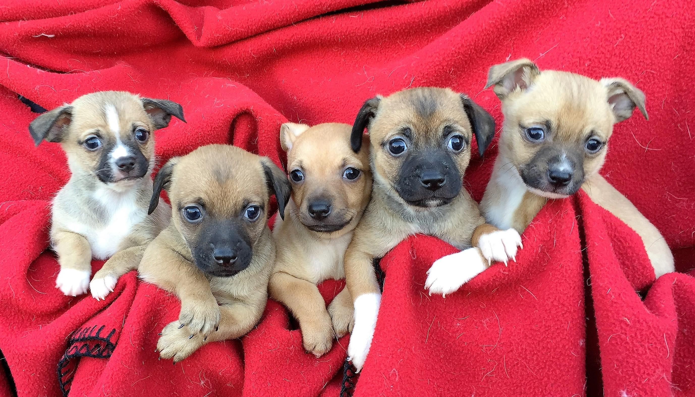 Mary\'s pups