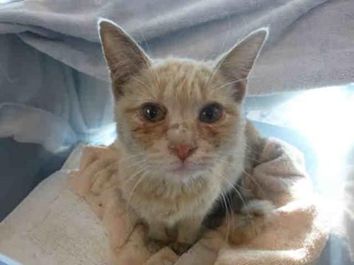 cat ID#A1606862