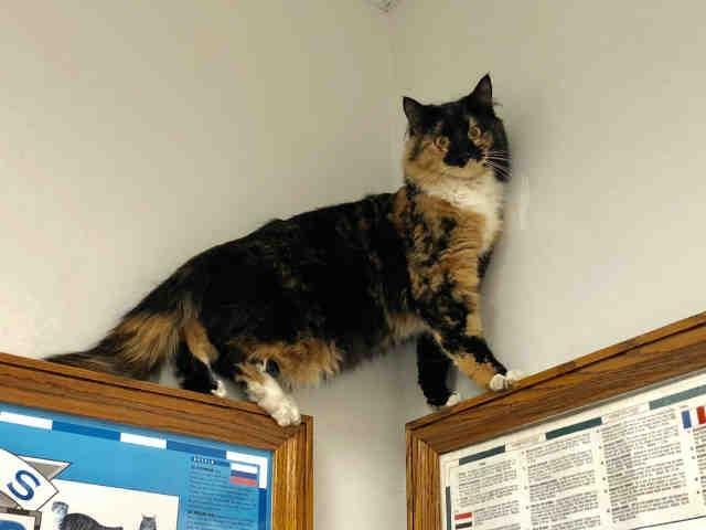 Sonia cat