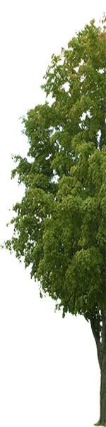 TreeLeaveshalf.jpg