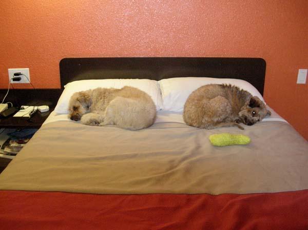 Tillie and Sophie