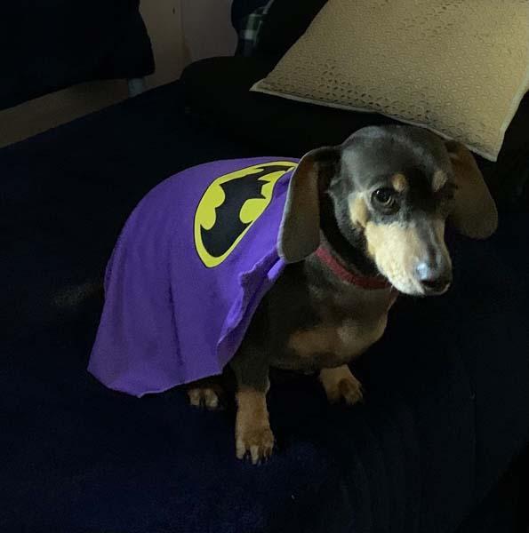 penny batgirl