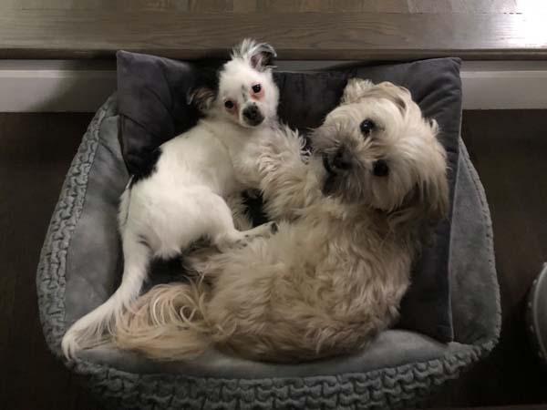Lulu & Monty
