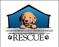 Golden Retriever rescue